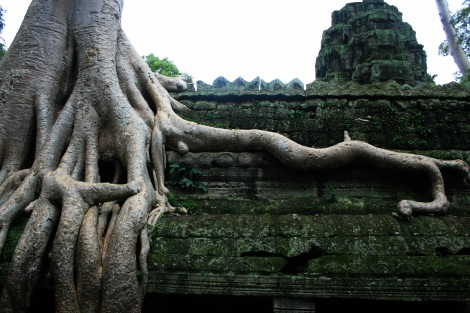 Ta Prohm, or Tomb Raider Tomb, Angkor Wat
