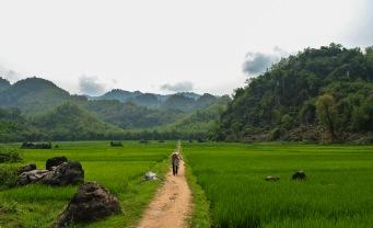 Fields in Mai Chau