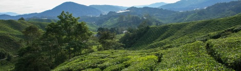 Visit the Cameron Highlands and see another side to Malaysia.