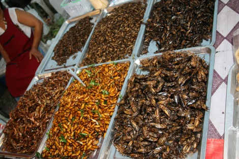 Fried selection of insects, Thailand.